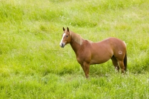 TWE5D5S4920-01.jpg  North America,USA,Washington,Horse in Spring Field,Palouse Country Washington