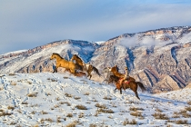 TWE_MG_6231-5.jpg  North America; USA, Wyoming; Shell, Big Horn Mountains: Horse Drive Through the Snow in the Big Horn Mountains