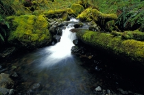 TWE38116.jpg  North America,USA,Washington,Small Waterfall in the Sol Duc Rain Forest