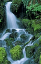TWE38120.jpg  North America,USA,Washington,Small Waterfall in the Quinault Rainforest
